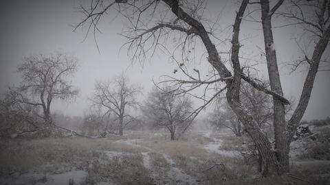Melancholy Winter Landscape 2 Footage