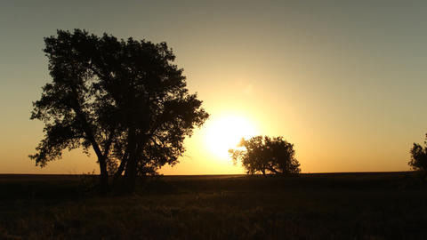 Sunrise Behind Trees on the Prairie Timelapse Footage