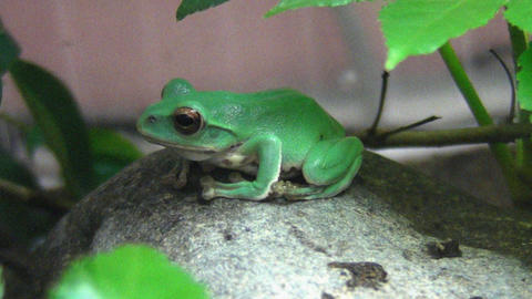 frog QHD 01 Stock Video Footage