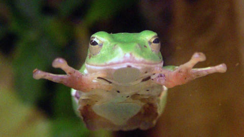frog QHD 03 Stock Video Footage