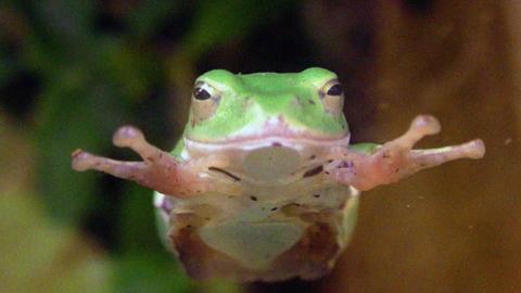frog QHD 03 Footage