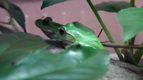 frog QHD 07 Stock Video Footage