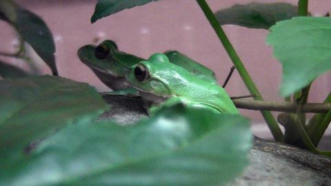frog QHD 07 動画素材, ムービー映像素材