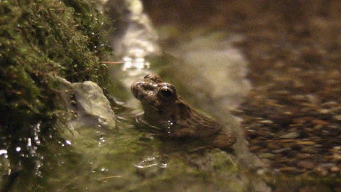frog QHD 09 Stock Video Footage