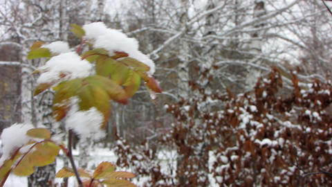 First snowfall 1 1 Stock Video Footage