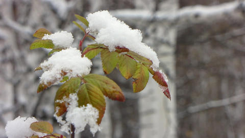 First snowfall 3 Stock Video Footage