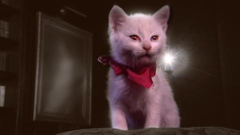 Glamour kitty (var. 1) Stock Video Footage