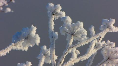 Winter 4 Stock Video Footage