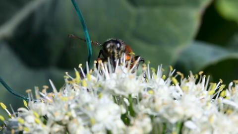 Wasp Stock Video Footage