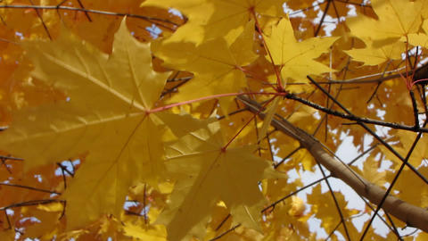 Autumn leafs 4 Stock Video Footage