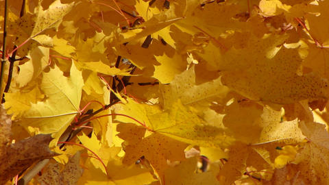 Autumn leafs 1 Stock Video Footage