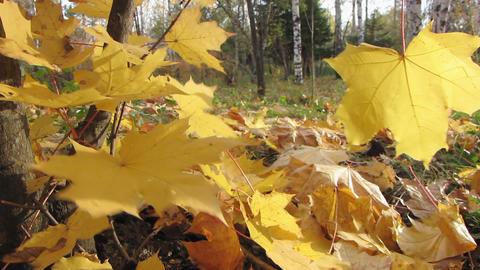 Autumn leafs 13 1 Stock Video Footage