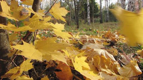 Autumn leafs 13 1 Stock Video Footage