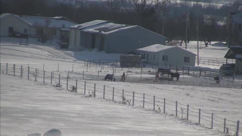 horses in distance hi def Stock Video Footage