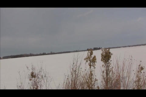 Dried plants in snowfield Stock Video Footage