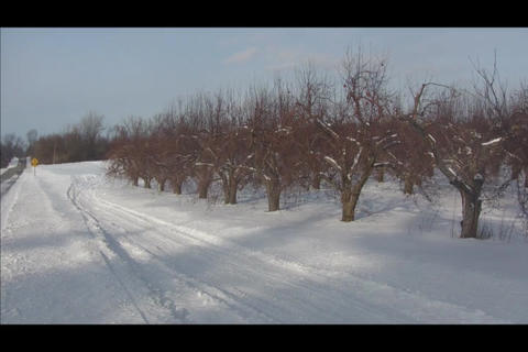 Road and orchard Stock Video Footage
