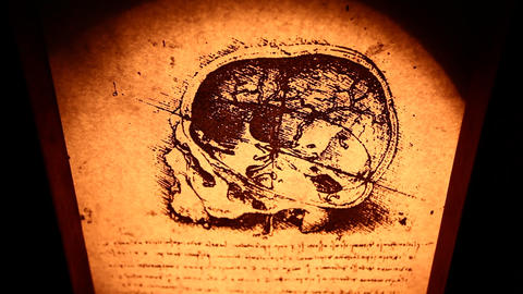 Leonardo Da Vinci Anatomy stock footage