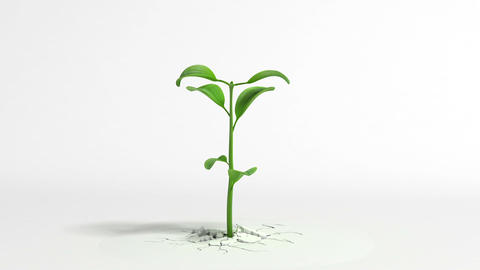 Growing plant on white background Animation