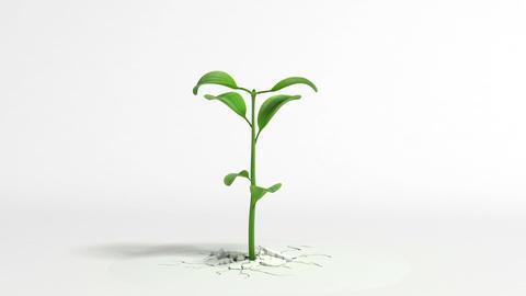 Growing plant on white background Animation
