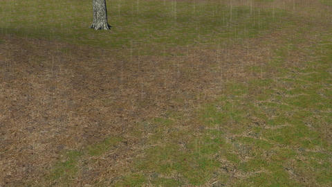 Rainy Day in a Field: Looping Animation