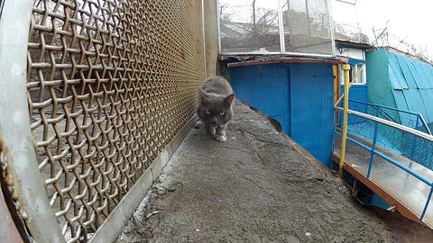 Cat goes along the iron lattice Footage