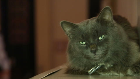 A black cat with green eyes Footage
