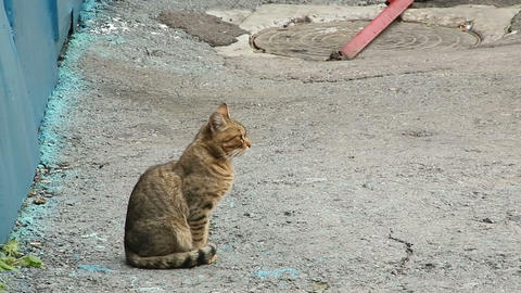 Cat on the pavement Footage