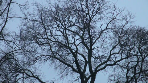 The branch of a tree without leaves against the sk Footage