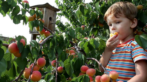 Boy And Apricot S HD stock footage