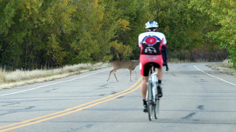Deer Crossing In Front Of Cyclists stock footage