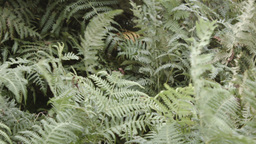 Fern leaves blowing in the wind stock footage Footage
