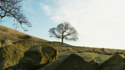 Nature landscape with Trees and drystone stock foo Footage