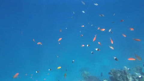 Red Sea Snorkeling Hd Pack