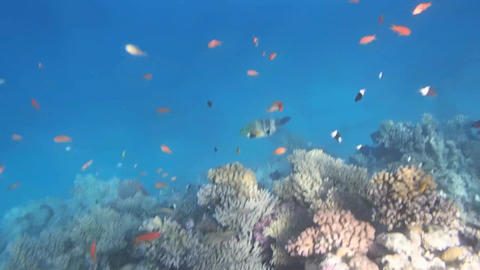 Red Sea Snorkeling Hd Pack 0