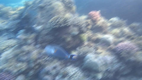 Red Sea Snorkeling Hd Pack 1