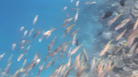 Snorkeling In The Red Sea stock footage