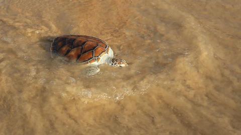 Sea Turtle Release 0