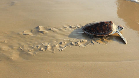 Sea Turtle Release 2
