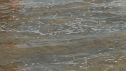 Sea Turtle Release Footage