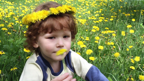 Child in Dandelions Footage