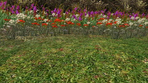 color wildflower in garden,3d landscape Animation