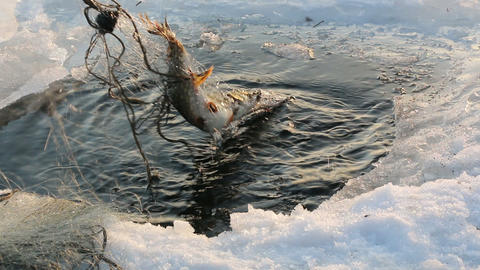 Fish caught with winter fishing nets Footage