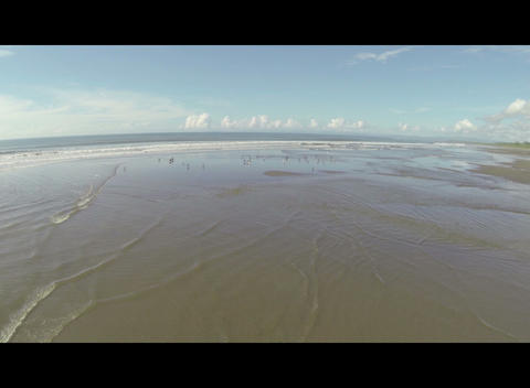 Birds flying over shallow water Footage
