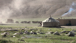 Yaks go out in early morning, yurt landscape Asia Footage