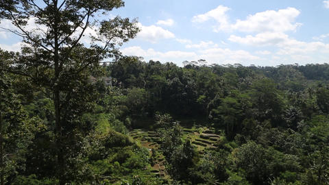 a rice terrace in ubud, indonesia Footage