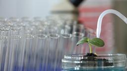 Green plant in genetics laboratory 5 N 2 A 0298t Footage
