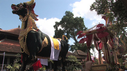 Balinese Hindu Royal Cremation Ceremony (Ngaben) I stock footage
