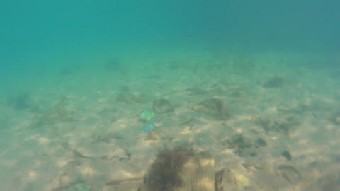 Marine pollution. Underwater Footage