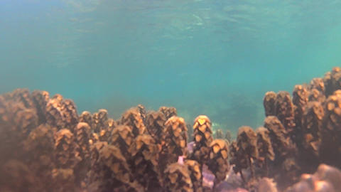 Underwater vegetation Footage