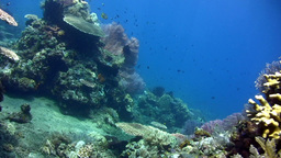 Amazing hard and soft coral reef Footage